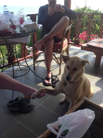 Samui Mountain Village: Deck with Molly the dog visiting us