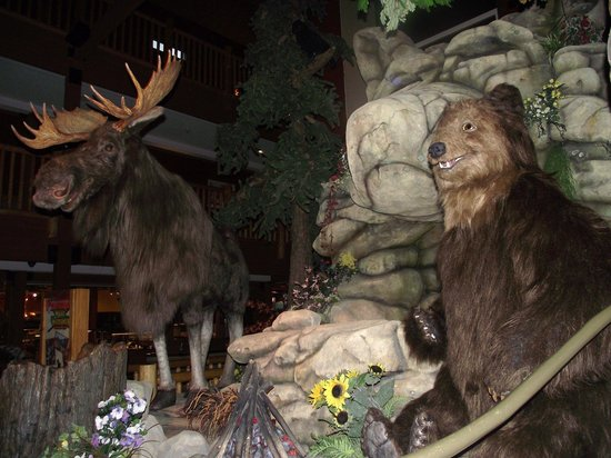 Great Wolf Lodge: animals