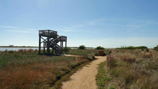 Port Aransas Nature Preserve at Charlie's Pasture
