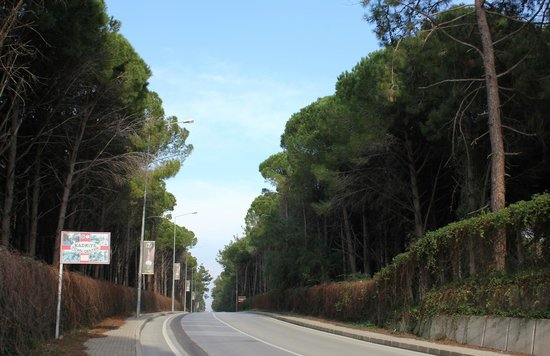 SENTIDO Zeynep Golf & Spa : Аллея к дороге от отеля