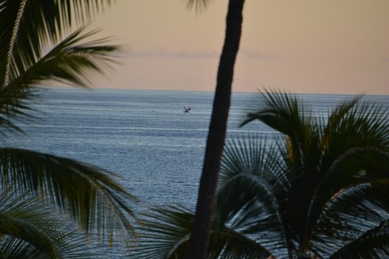 Royal Kona Resort: View from the room - Whale watching