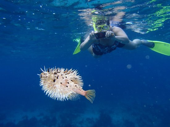 Sunbaby Glass Bottom Boat: A SUNBABY customer snaps a pic of the blowfish!