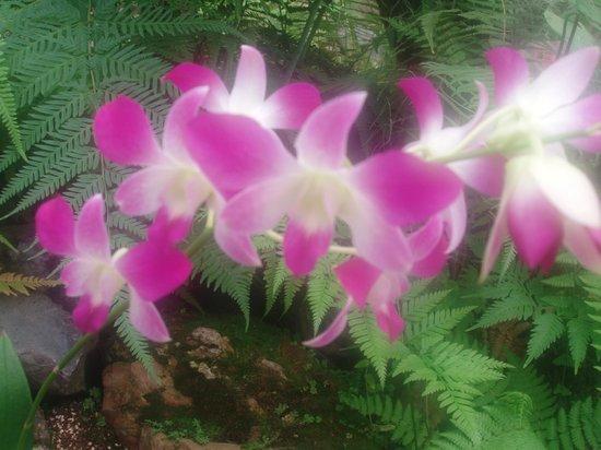Jardin Botanico de Quito: Purple Orchid