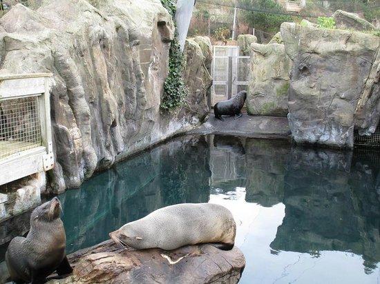 Living Coasts: Grace, Tuna and Karel the fur seals