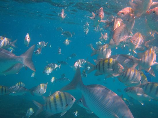 Silver Moon Cruises: Swimming with the fishes
