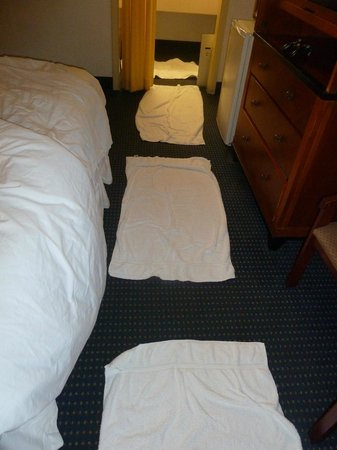 Ramada Fort Lauderdale Airport/Cruise Port : Towels on floor to protect socks from filthy carpets