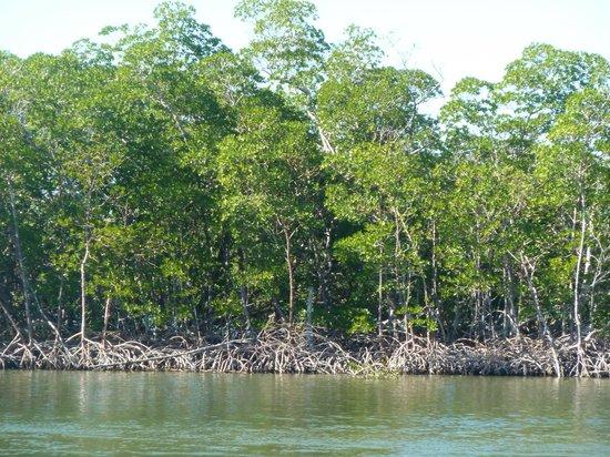 Everglades Day Safari: Everglades!