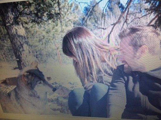 Colorado Wolf and Wildlife Center: Keara so sweet