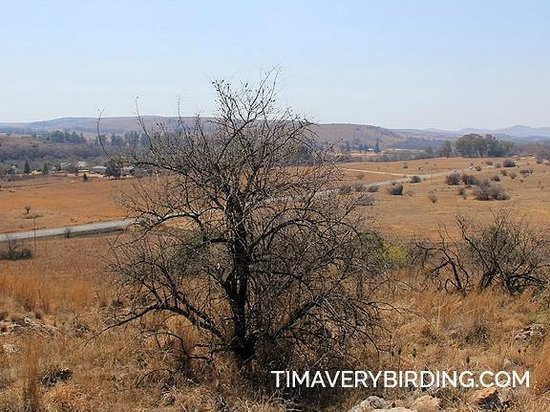 Sterkfontein Cave: The view from up top!
