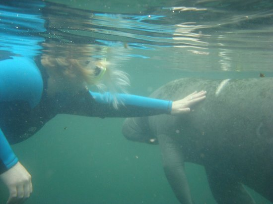 American Pro Diving Center : petting a manatee
