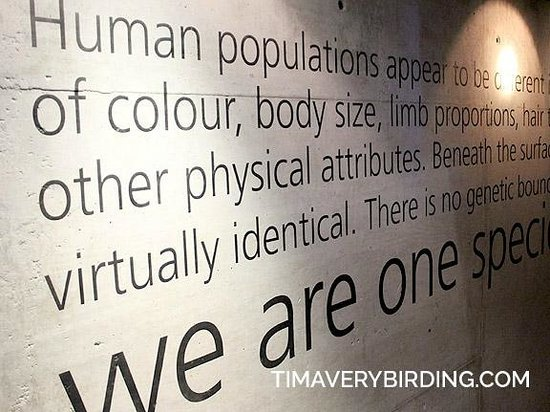 Maropeng Visitor Centre : Great statement...