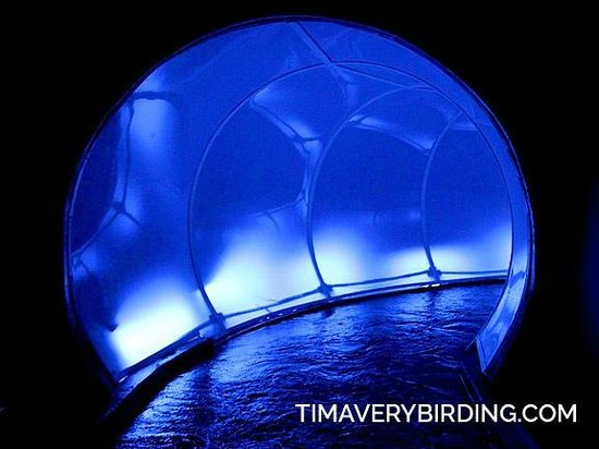 Maropeng Visitor Centre : Tunnel Boat Ride--yep, boat ride...