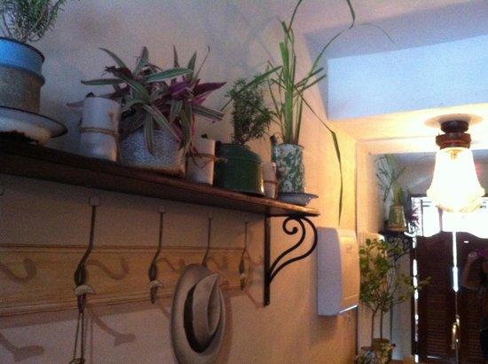 Watercress: Mosquito repellent plant