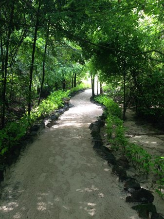 Constance Tsarabanjina: Pathways through the island