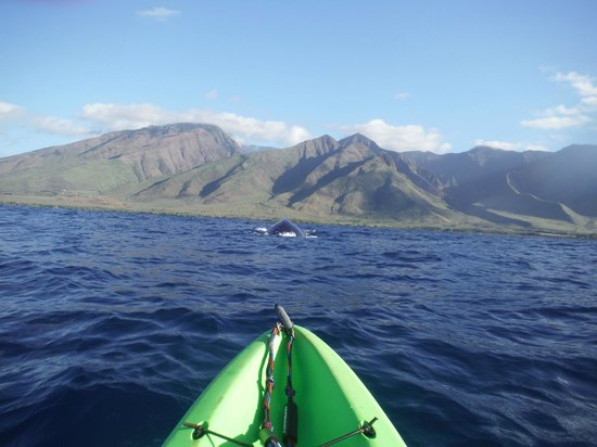 Maui Eco Tours : Swimming towards the kayak before going under.