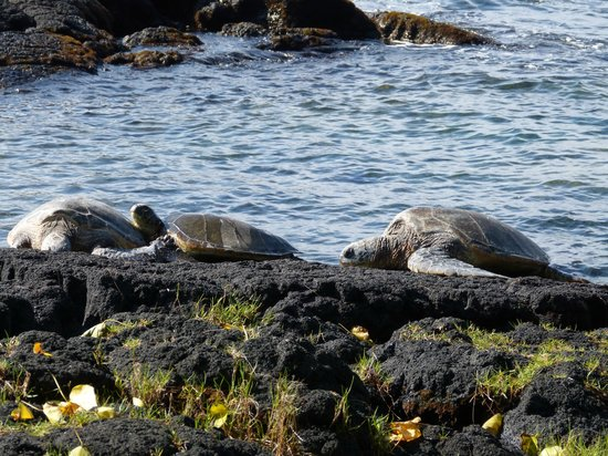 Akamai Adventure Tours & Travel: Green Sea Turtles