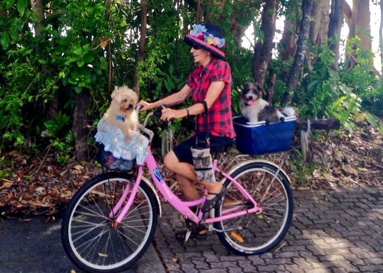 Ellis Beach, Australia: Lots of people ride around the Northern Beaches, dogs too!