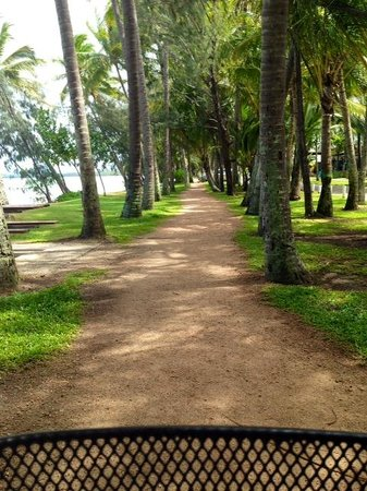 Northern Beaches Bike Hire : Palm Cove - riding between the palms