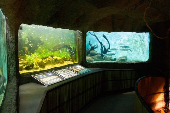 National Zoological Gardens of Sri Lanka: The fish tanks are kept well