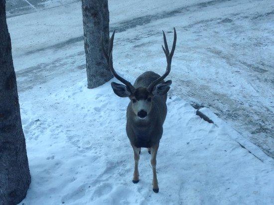 Hidden Ridge Resort: The welcoming Elk