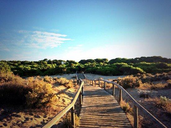 Barcelo Punta Umbria Beach Resort: Paseo de madera por los enebrales