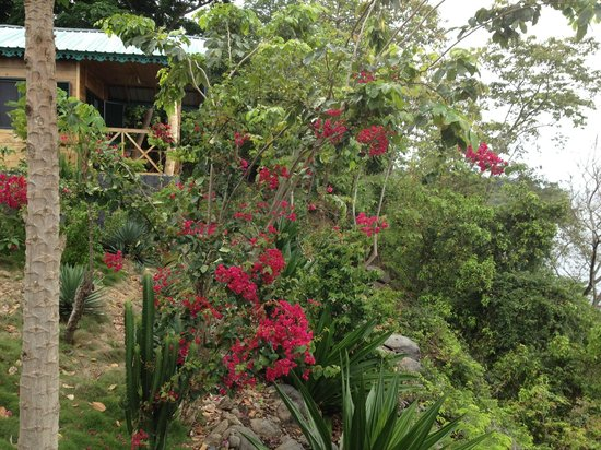 Mucumbli: around the bungalow