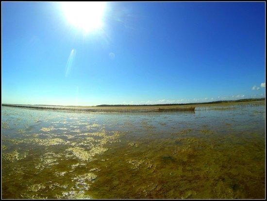 Walkonwater : walk through the lagoon