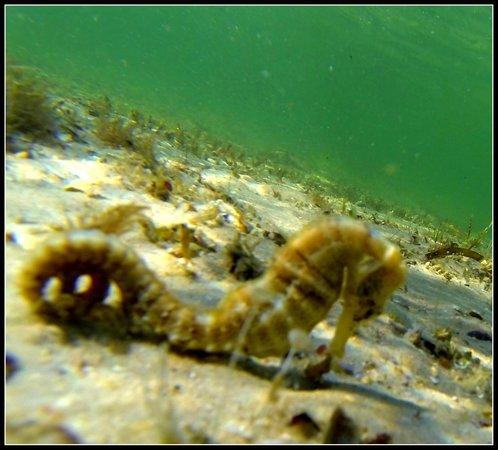 Walkonwater : Seahorse