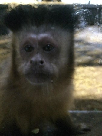Monkey World: Tau's group