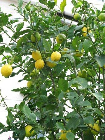 Casa do Patio by Shiadu : Un joli citronnier dans la cour