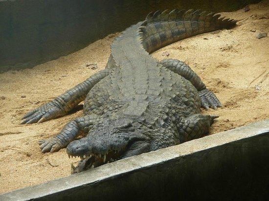 InterContinental Mauritius Resort Balaclava Fort: парк крокодилов