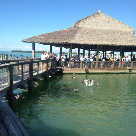 Feeding the tarpon and the birds picture of islamorada for Fish co