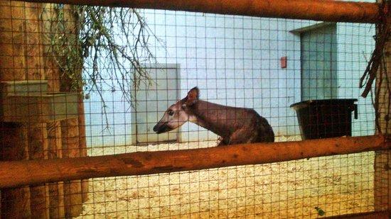 ZSL London Zoo: london zoo