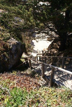 SeaCrest OceanFront Hotel: Die Treppe zum Strand