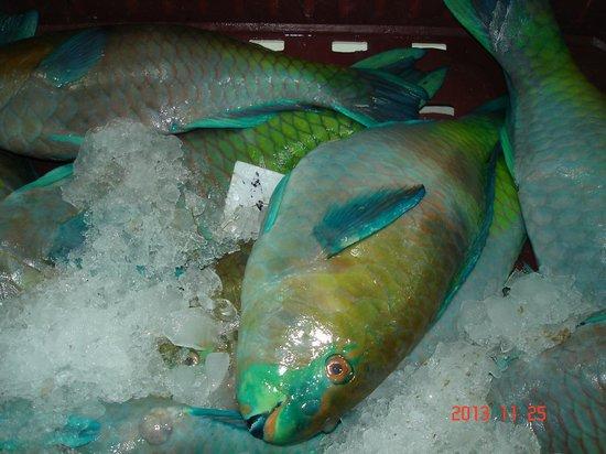 Fares Seafood : Рыба-попугай.