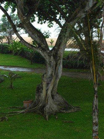 Grand Hyatt Bali: после дождя