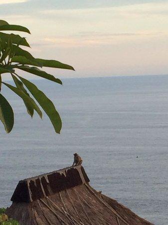 Bulgari Resort Bali: Monkey