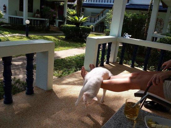 Sabai Resort: Вопросов нет