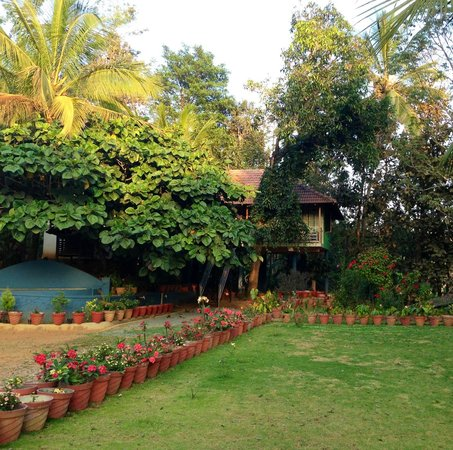 Verdure Wayanad: Gorgeous tree rooms