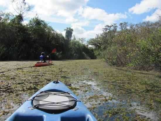 Shurr Adventure Company Day Tours: Kayaking through the everglades.