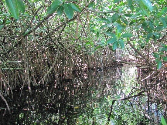 Shurr Adventure Company Day Tours: Kayaking through mangroves.