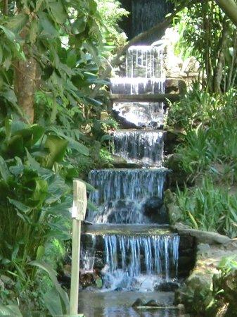 Foto De Botanical Garden Jardim Botanico Rio De Janeiro Jardin