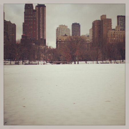 Central Park In the winter