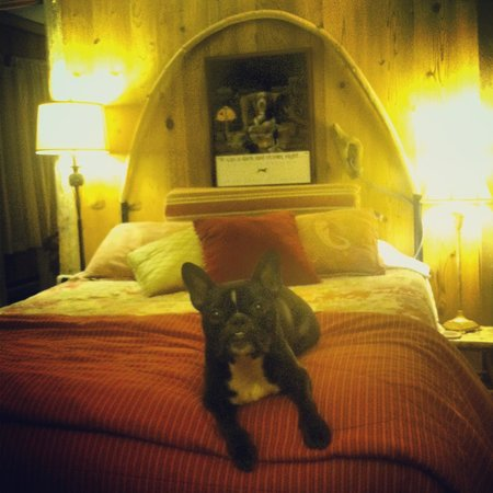 Manitou Lodge Bed and Breakfast: our dog, Sam, comfy in the Owl suite