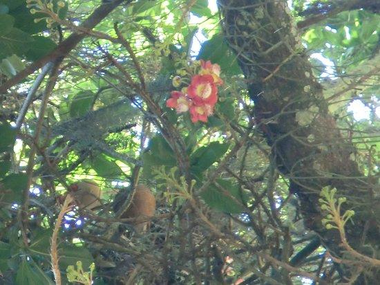 Jardin Botanique Rio Foto Di Botanical Garden Jardim Botanico