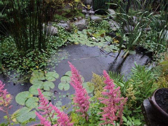 Jardin de bonsai bild von casa azul puerto varas for Bonsai de jardin
