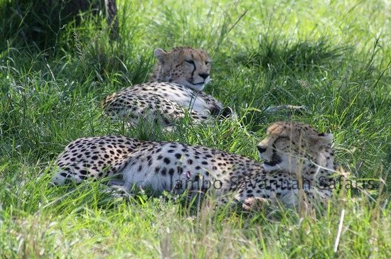Jambo Savannah Safaris - Private Day Tours