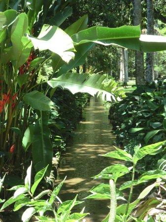 Jardin Botanique Rio Foto De Jardim Botanico Rio De Janeiro