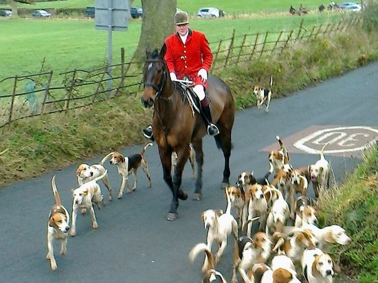 Tithe Barn Bed & Breakfast: Hounds at exercise Boxing Day