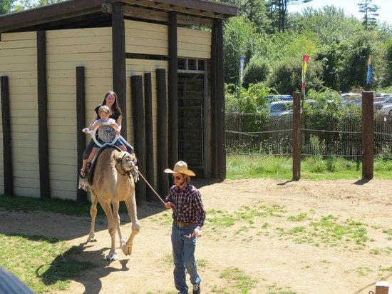 York's Wild Kingdom Zoo and Fun Park : Riding the camel!